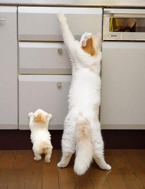 不论是动作或是行为常常都是模仿妈妈