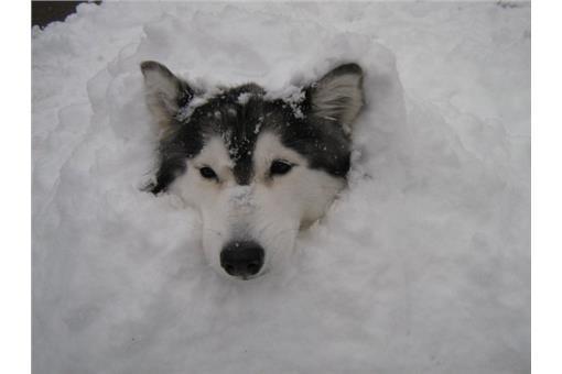 躲藏过冬的动物