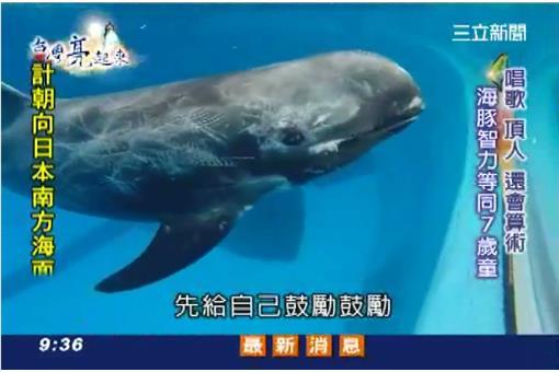 海豚皮肤的沟槽结构