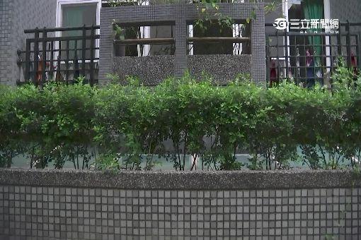 矮围墙庭院效果图