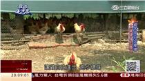土窯雞/食尚生活家