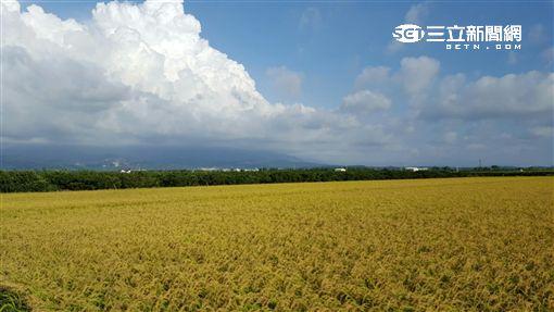 晴天、太陽、好天氣、晴朗、稻田(圖/記者張碧珊攝)