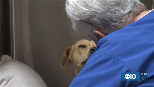 美國驚爆狗狗被出租當性奴,慘遭性虐。(圖/翻攝自《KHOU》)