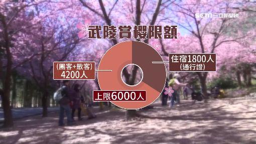 """武陵賞櫻團客逾6成! 人車管制""""只得跟團"""""""