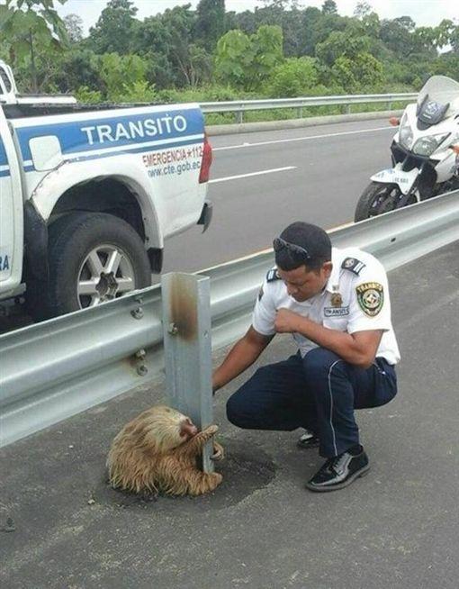 樹懶 圖/翻攝自Comisión de Tránsito del Ecuador臉書