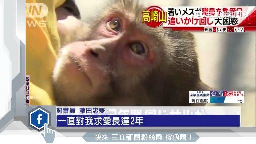 小母猴愛上人類大叔 猛烈攻勢熱情飛撲