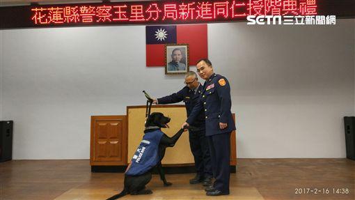 狗警員,警犬,王小胖,升官(警方提供)