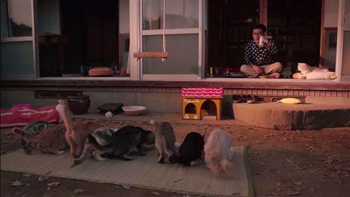 貓咪收集,ねこあつめ圖/翻攝自AMGエンタテインメント MOVIEチャンネル YoouTube