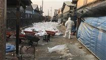 台南,土雞,禽流感,撲殺/中央社