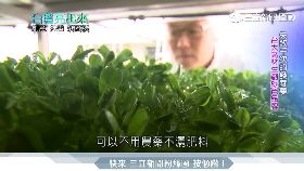 金融菁英轉農業 種出有機「活芽菜」