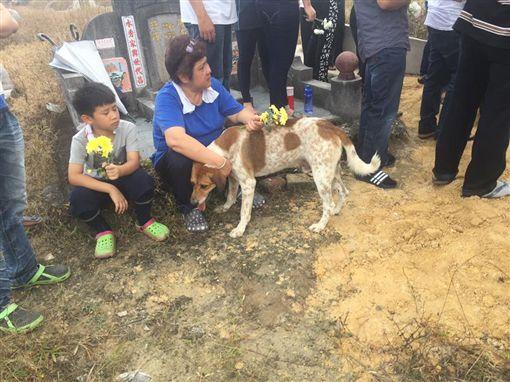 不捨主人過世,忠犬狂追送葬車隊。(圖/翻攝自Leong Khai Wai 臉書)