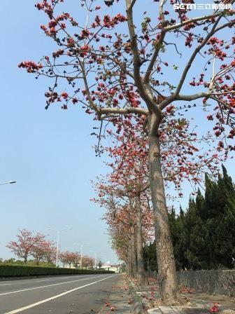 木棉花熱力大爆發  台南五大必遊木棉花道(圖/台南市觀光局)