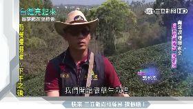 青年返鄉接家業 助茶產業轉型闖新路