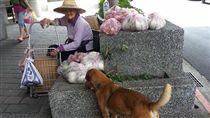 高齡嬤忍腳痛賣菜 拒物資堅持靠自己 圖/翻攝自 我要當流浪動物義工救援團隊 臉書