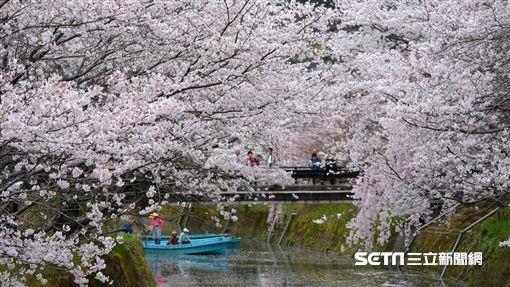 日本德島櫻花。(圖/雄獅旅遊提供)