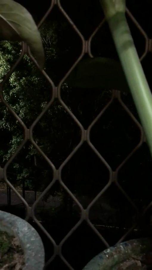 民眾拍下暗夜裡國中內傳來國旗歌聲。(圖/擷取自我是五股人)