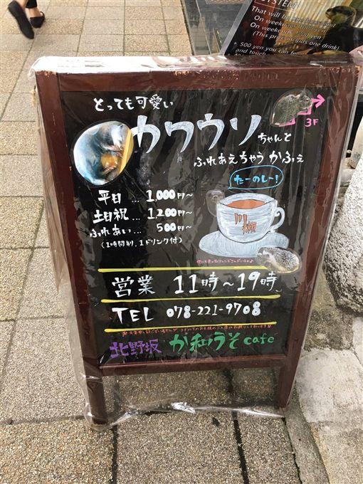 ▲水獺咖啡廳。(圖/翻攝自記由屋臉書)
