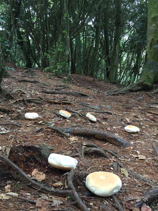 鳶嘴山登山步道遭不明宗教團體沿路丟棄麵包。(圖/擷取自爆料公社)