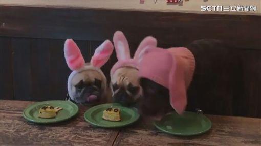 Maro的蛋糕被搶走(圖/翻攝IG)