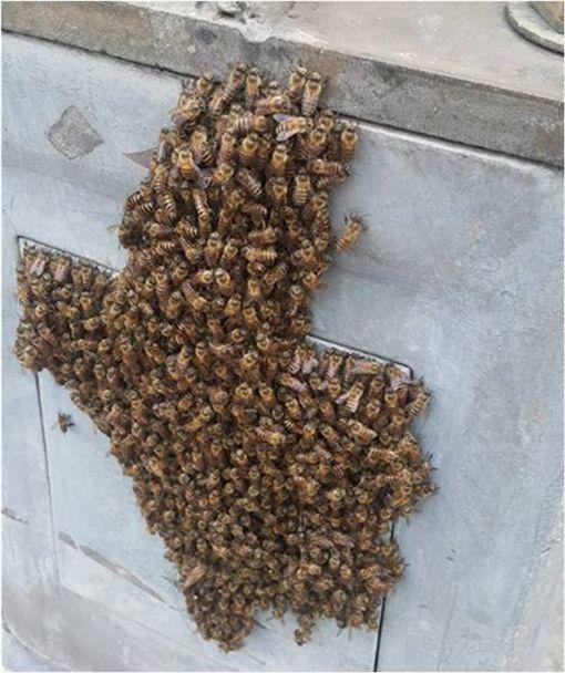 路燈,蜜蜂,蜂窩,爆料公社,箭頭 圖/翻攝自爆料公社