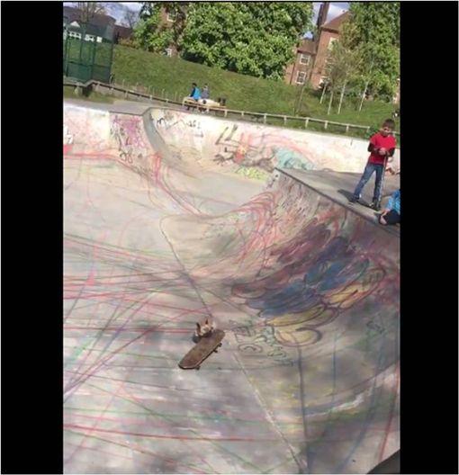 毛小孩,法鬥,鬥牛犬,滑板,極限運動,公園 圖/翻攝自臉書