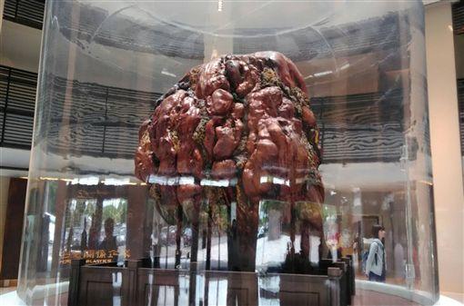 台塑企業創辦人王永慶生前的收藏品不多,但卻很亮眼,台塑企業文物館展示一塊8.5噸的木化石,是全球公開展示最大木化石。中央社記者潘智義攝 106年4月21日