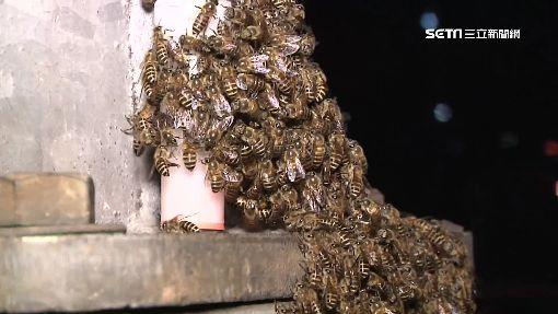 公園燈桿睹數百「野蜂」 婆媽見狀驚慌逃