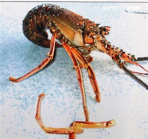 張男持釣魚線與魚鉤拉出海鮮餐廳門口水槽的大龍蝦,店員發現後隨即報警將他逮捕(翻攝畫面)