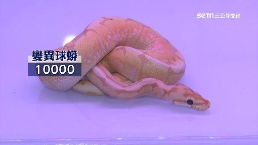 正港「蛇蠍」美人!蛇當寵物 網友:想當許仙