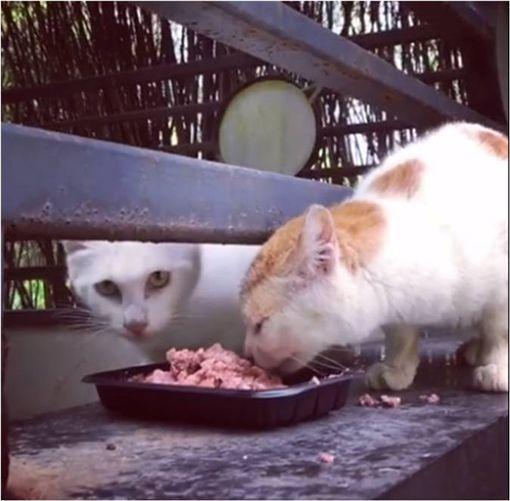 寵物,新奇,毛小孩,喵星人,貓,浪浪,食物 圖/翻攝自臉書