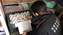 王功蛋行供應的白色散裝蛋,被檢出戴奧辛超標,桃園衛生局連續兩天稽查各單位,下架蛋品達1139多公斤。圖為桃園市衛生局人員稽查情形。/中央社