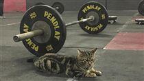 健身房貓咪(翻攝Love Meow
