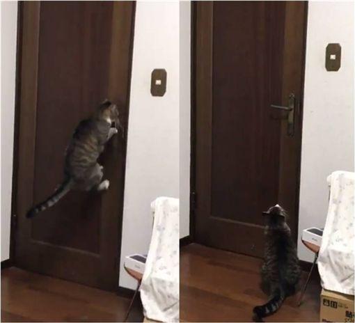 貓,毛小孩,門把,水龍頭,喵星人 圖/翻攝自推特