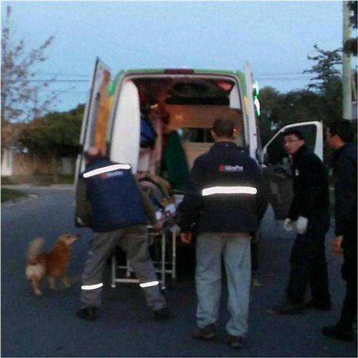 阿根廷,忠犬,毛小孩,腦震盪,Jesus Hueche,狗 圖/翻攝自臉書