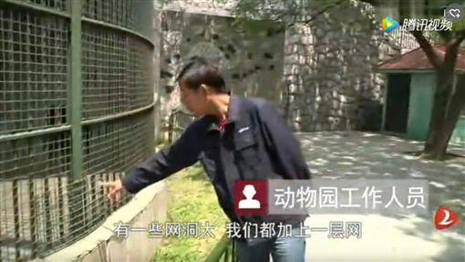 ▲陸男餵棕熊被熊咬。(圖/翻攝自《博聞社》) https://bowenpress.com/news/bowen_177049.html