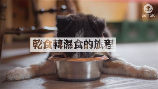 圖/翻攝自PetTalk官網