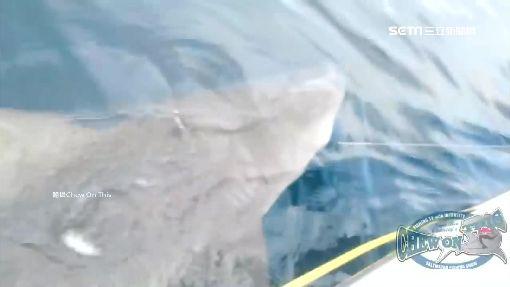 """捕魚捕到大白鯊! 漁夫復刻""""老人與海"""""""