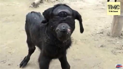 印度,小羊,獨眼小羊(圖/翻攝自YouTube)