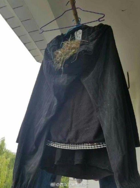 四川省西華大學男大生褲子被鳥築巢還下蛋/西華大學微博