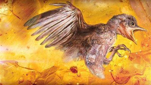 鳥類標本 翻攝陸媒