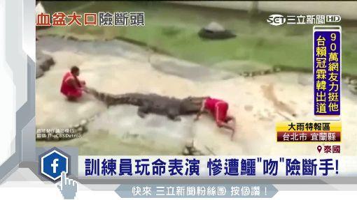 """鱷魚秀""""泰""""恐怖! 鱷咬訓練員頭猛甩!"""