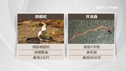 """烏龍一場!公園又亂放生蛇? 是""""笄渦蟲""""啦"""