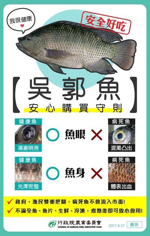 必學/吳郭魚爆湖泊病 這樣挑魚最安心(圖/農委會)