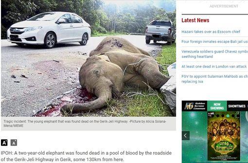 馬來西亞,大象(圖/翻攝自《星報》)
