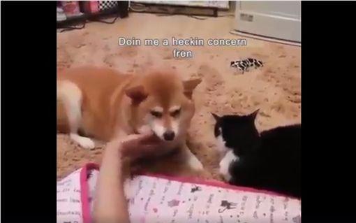 ▲圖/翻攝自《Doge Emojis》臉書粉專