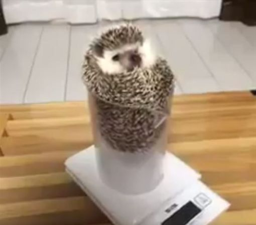 刺刺健檢快睡著 「刷」一聲滑落杯底圖/翻攝自かわいい動物bot TWITTER