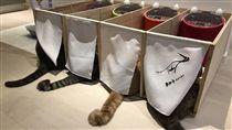 「一蘭喵麵館」隆重開張 喵星人隔間吃飯萌翻網友(圖/翻攝自《貓咪也瘋狂俱樂部》臉書)