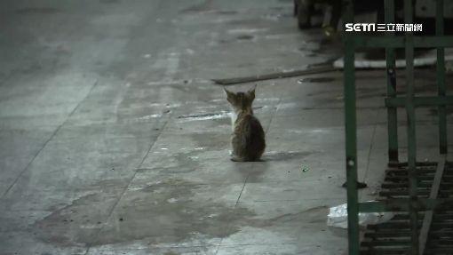 不滿餵養流浪貓 男持棍攻擊3人掛彩