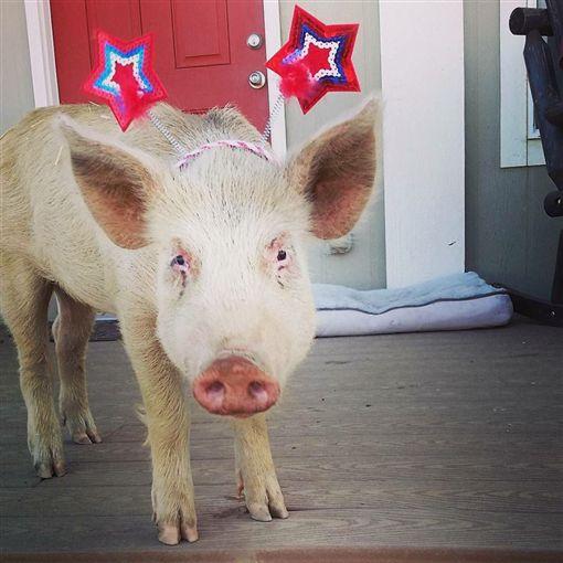 傷痛可以被愛治癒!飼主用心照護 瀕死豬重獲新生(圖/翻攝自《Sale Ranch Sanctuary》臉書)