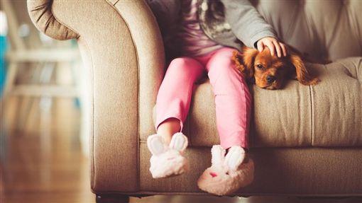 狗,毛小孩,寵物 圖/Pixabay